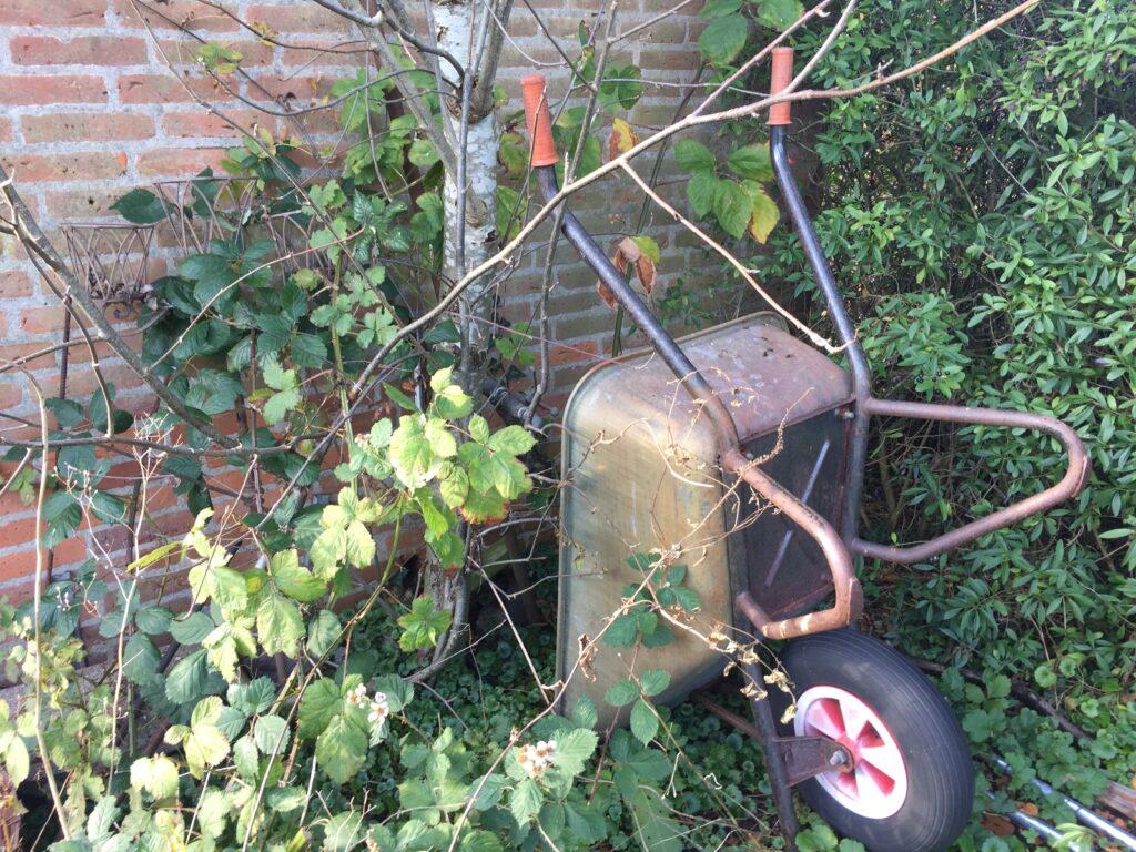 Gammel trillebør i begroet have